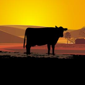1. Sušené hovězí maso