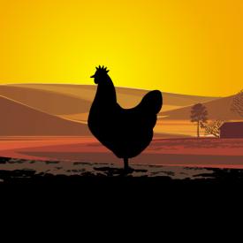 3. Sušené kuřecí maso